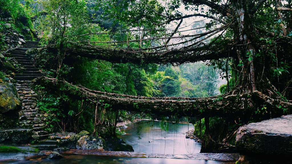 cherrapunjee-living-root-bridges-and-the-double-decker-root-bridge